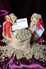green coffee samples.jpg